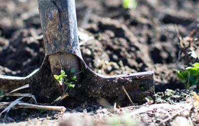 EKO kmetijstvo in gozdarstvo