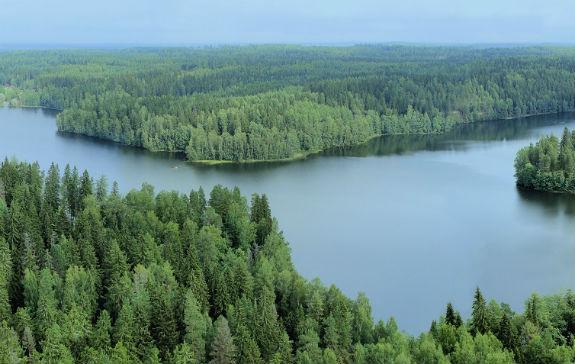 Papirna industrija in gozdarstvo