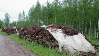 Pokrivanje ostankov lesa v gozdu